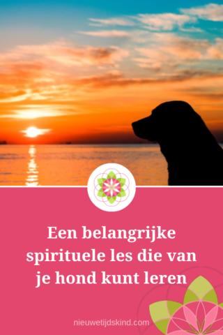 Een belangrijke spirituele les die van je hond kunt leren