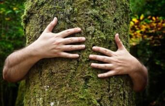 Wetenschappers ontdekken dat ook bomen een 'hartslag' hebben
