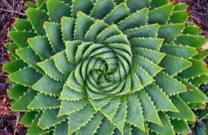 Kan heilige geometrie helpen je bewustzijn te ontwikkelen?