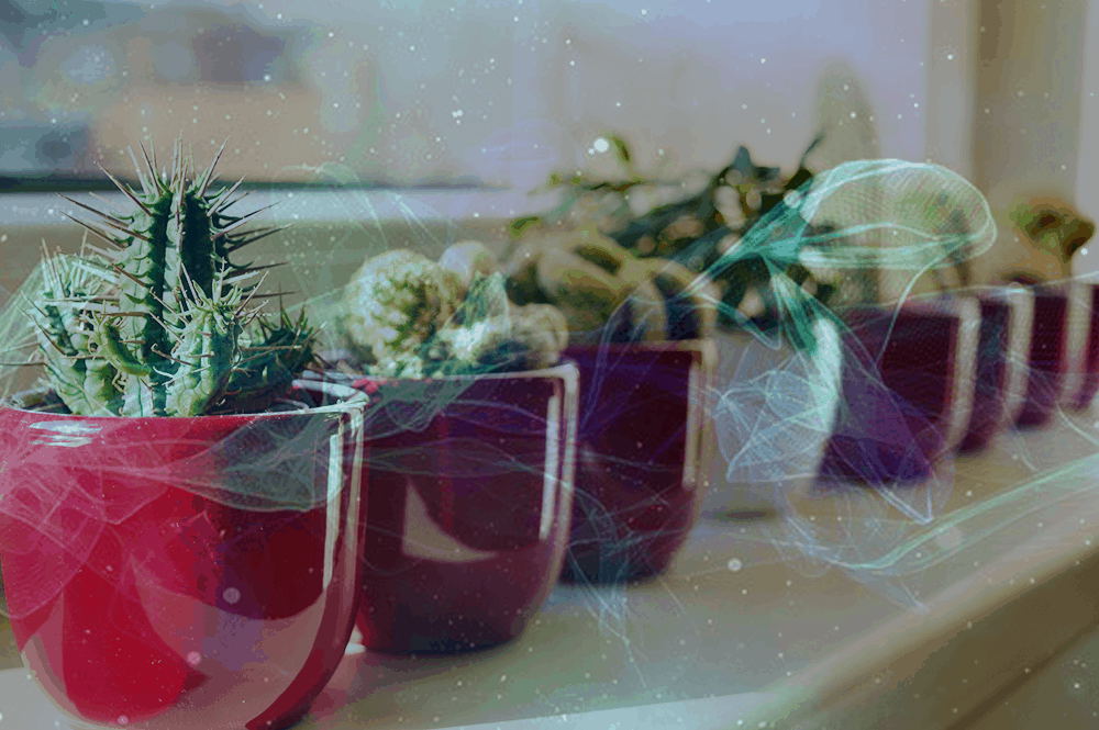 Water behandeld met intentie kan de groeisnelheid van planten beïnvloeden