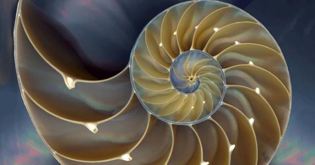 spiraal-heilige-geometrie