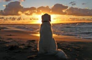 spirituele les die van je hond kunt leren