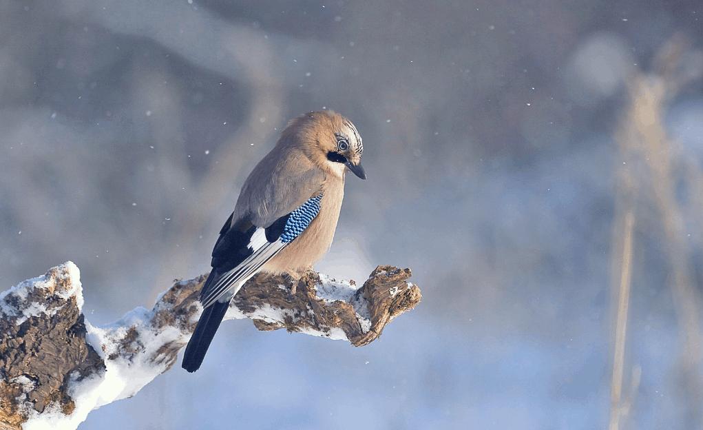 Energiemanagement in het ritme van de seizoenen - Winter