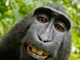 Wat tips om je drukke apenbrein te kalmeren