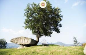 Jouw boomsterrenbeeld