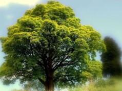 Waarom zou je kiezen voor een innerlijke totaaltransformatie