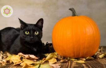Dit is waar zwarte katten eigenlijk voor staan