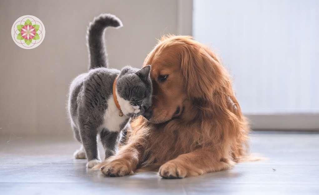 Hooggevoelige huisdieren. Ja echt!