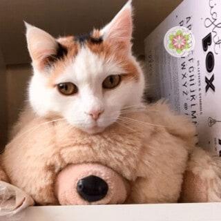 De mystiek van katten