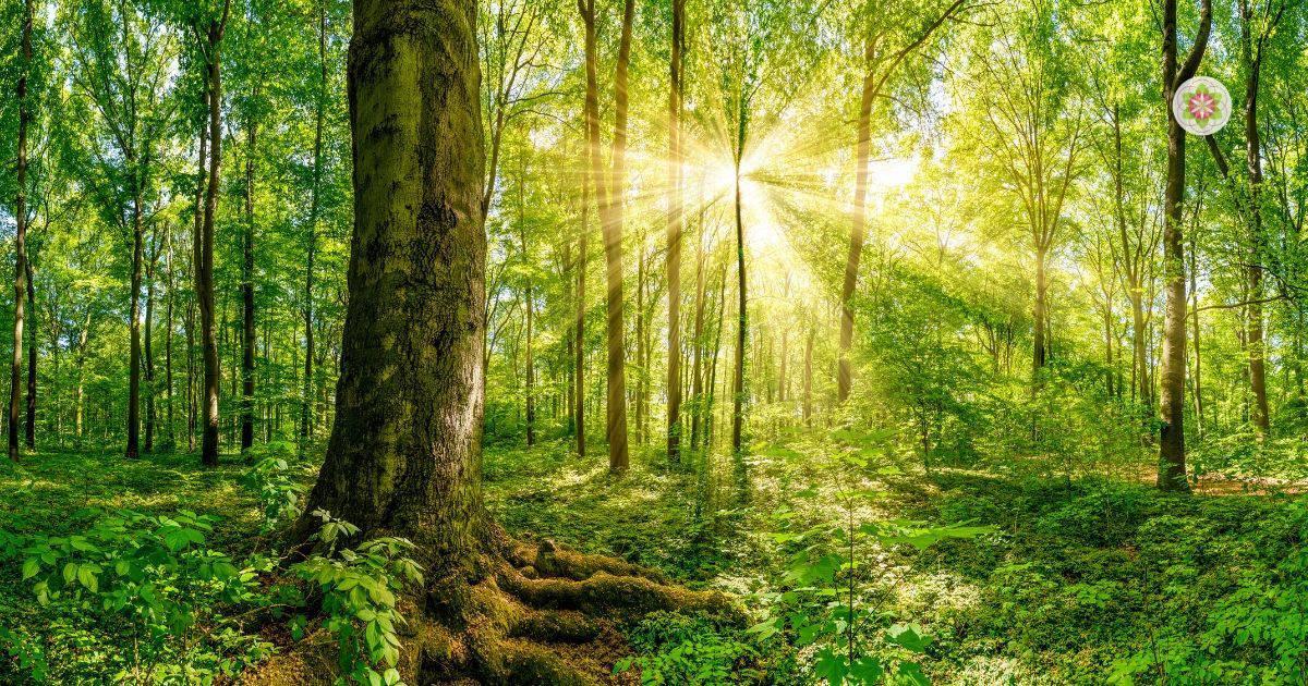 Tijd doorbrengen in de natuur- Bos