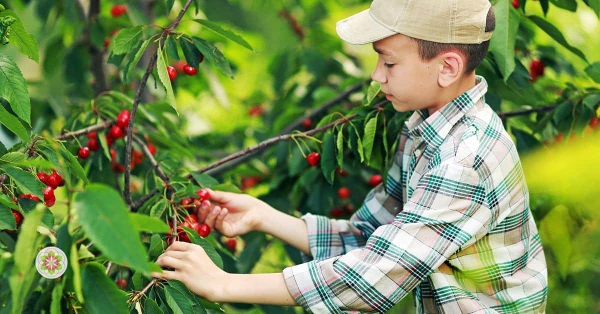 kinderen genezen van autisme, angststoornissen en ADHD (2)