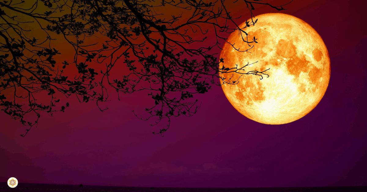 Vang krachtige maanenergie op in je eigen maanwater
