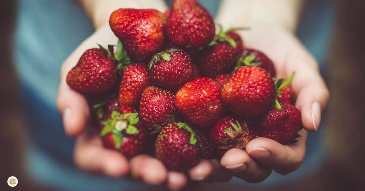 rood fruit- manieren om je te aarden