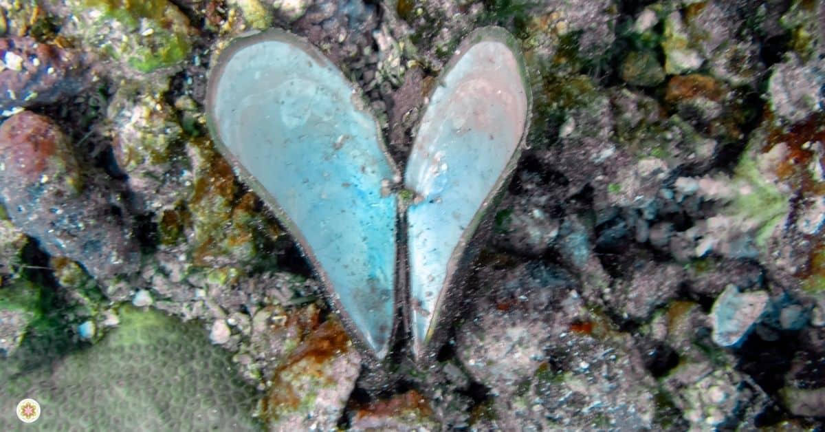 In je hart duiken